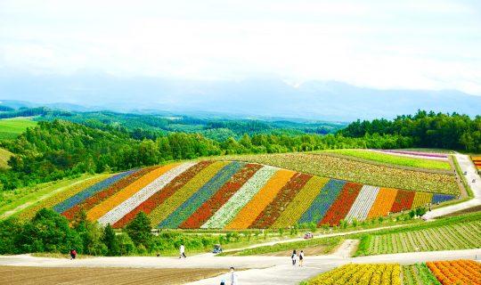 北海道Farm Stay